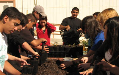 Lone Pine Future Farmers repotting native plant seedlings