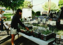 Native Plant Sale Preparation