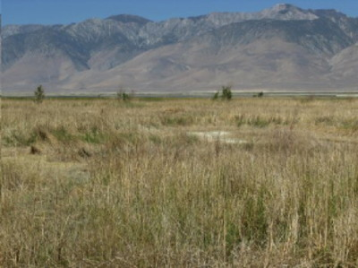 Owens Lake plot T30-1